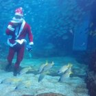 圣诞节怎么玩?让你看看最霸气的圣诞老人!#圣诞节##圣诞老人##自由潜#@美拍小助手