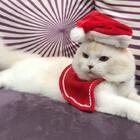 我穿紅通通的有沒有萌萌噠~祝大家聖節節快樂🎄🎄🎄