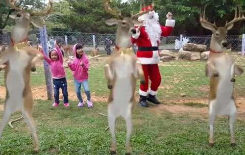 【汝汝與杉杉的魔法小舖美拍】2087 聖誕夢遊仙境 - 平安夜強檔...