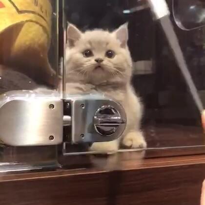 去到哪都要吸吸猫才有精力😏😏#宠物#