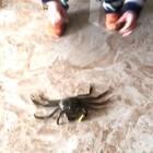 14M➕20D frank与螃蟹们!