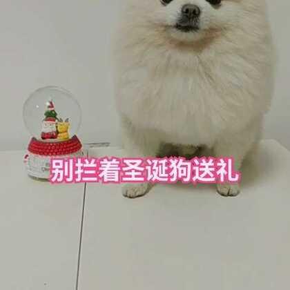 #12月24日##宠物#圣诞狗公公送礼啦!点赞加评论,评论中被点赞次数最多的送微信红包啦!#精选#