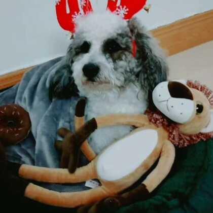 #宠物##美拍陪你过圣诞#☺☺☺