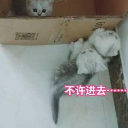 #宠物界逗比##宠物##精选#@宠物频道官方账号 @美拍小助手 库存,才发现小黑是个搅屎棍😂😂😂
