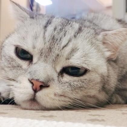 法派:这曲子听的我没法好好睡觉了#宠物#打节拍的猫眼睛😂😂😂
