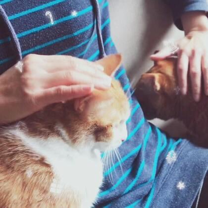 奴才:「一次摸兩隻貓好~舒服!」
