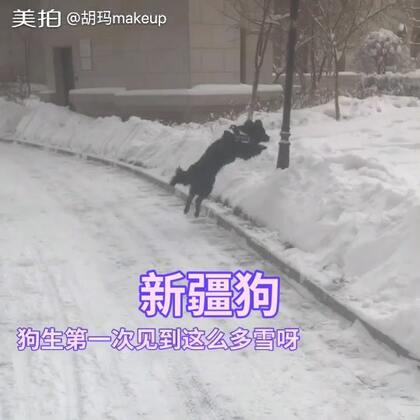 昨天下一场大雪,想想是狗生第一个冬天就带她出去,结果玩儿嗨了,哈哈哈其实我比他还激动哈哈啊哈#宠物狗狗#@爱奶蛋儿的小股神 @蛋黄的坏品味 @祁玮国家职业训犬师 @一犬一话