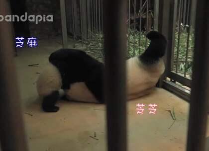#萌团子陪你过周末# 熊孩子竟然学会向奶妈告状!