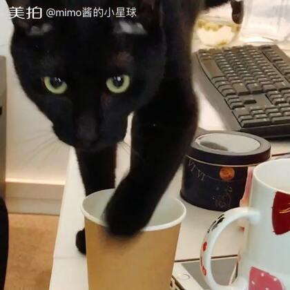 timo:这个杯子里怎么有会动的小花花?朕一定要摸摸它!!#宠物##timo#