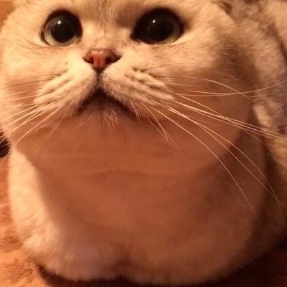 知道我为什么要踹小手嘛?因为我家没暖气呀!🙄🙄🙄#宠物#蹭个浴霸取取暖