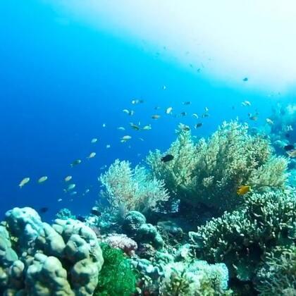 2017最后一天,好好怀念下温暖的海岛拍摄😏#带你去旅行#2018要一起同行吗?#水下摄影##潜水#