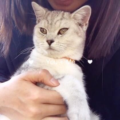 #宠物# 喵,不要亲我了,哈!