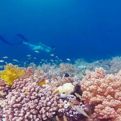 #自由潜水#在水下拍摄时就完全不一样了,卡比劳的水下珊瑚保护的非常好,2018我们继续组织海岛#水下摄影#希望与你同行