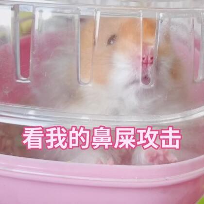 洗笼子的日常 #仓鼠##萌宠小仓鼠##仓鼠的日常#