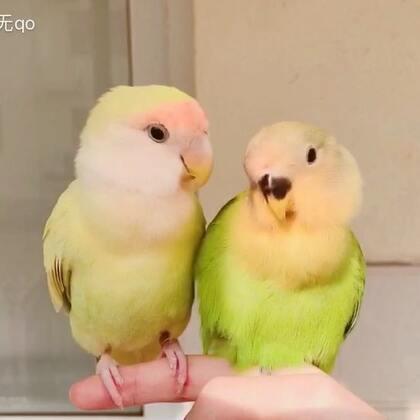支持妮妮和多多在一起的举个爪🙋#宠物##宝宝##宠物的有毒小视频#