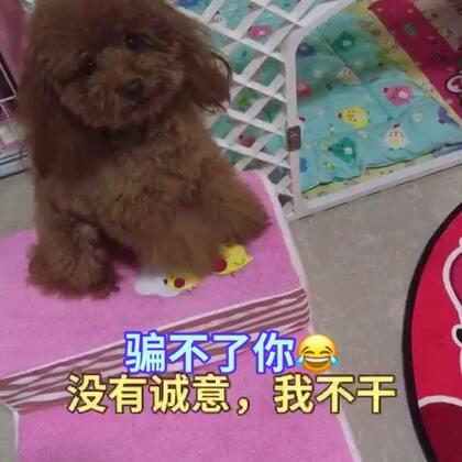 #汪星人##宠物#👀眼睛盯着牢牢的,骗不了你😂😂http://item.taobao.com/item.htm?id=557588985039 莎拉麻麻手工宠物零食!纯天然制作,更健康!