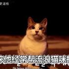 一只流浪的胖橘猫,每次怀孕就赖到店里不走了,店主就开开心心的照顾它生了三窝。天冷后大家都在力所能及帮助着周边流浪的毛孩子,希望它们过个能吃饱的暖冬。#宠物##喵星人#