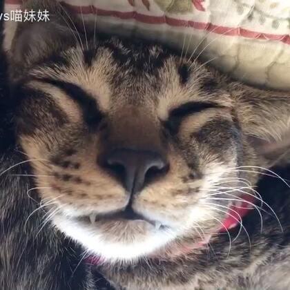 一秒叫醒那是分分钟的事😊然鹅 睡相太可爱 舍不得叫醒🙈🙈🙈捂脸杀敲可爱呐😍😍#宠物##1秒叫醒你家宠物##小阿狸🐱#