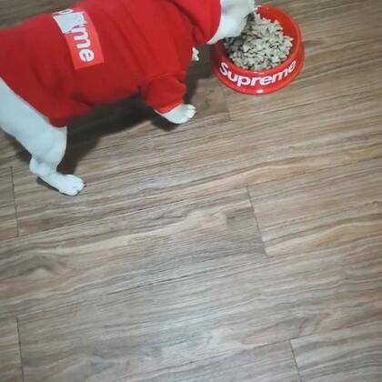 又是狗粮,真TM难吃!#宠物##法国斗牛犬##唐门法斗先生##极品法斗#http://m.tb.cn/h.AvpU2w 宠物衣服