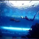 把自由潜变成一种艺术!那种感觉你知道吗?#艺术##自由潜水##运动#