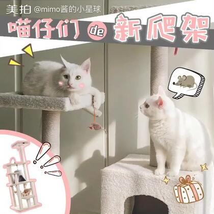 mimo:粑粑麻麻买了新的爬架?朕倒是要看看它能不能承受住朕的体重!✨关注并转赞评,下周抽两位送卡通猫猫手套哦✨#宠物##mimo#