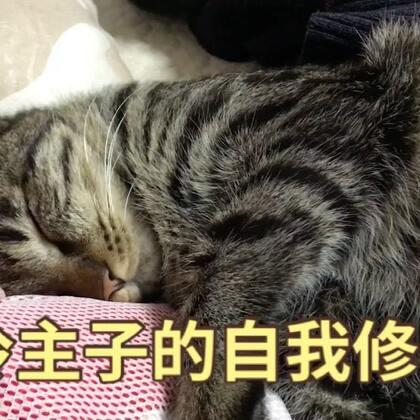 #1秒叫醒你家宠物#哈哈,一秒破功的懵逼喵😂#精选#