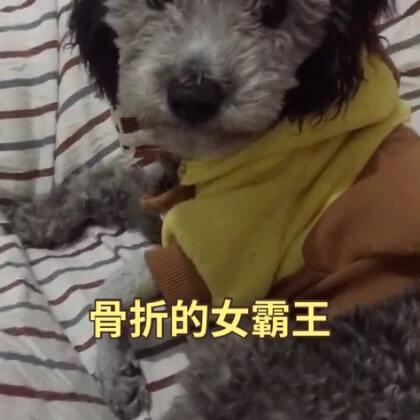 """#宠物#""""狗狗""""""""八福""""都是敏感词~这是女版vk"""