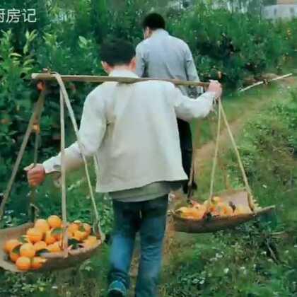 #美食##热门##农村生活#今天老板来要货。八哥亲自摘沃柑橘子。八哥慢慢挑选精品沃柑橘子。喜欢就点点赞转发,谢谢亲🌹😊