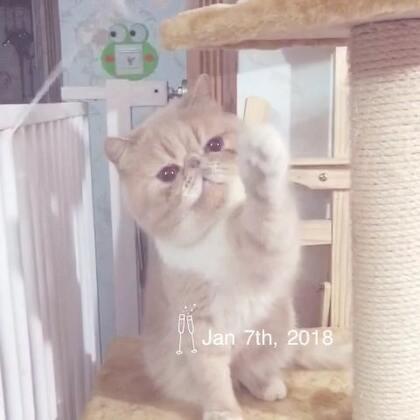 #加菲猫##加菲猫的幸福生活#