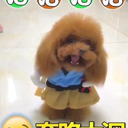 #宠物##搞笑##汪星人#哈哈😄