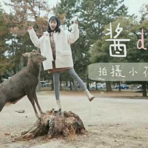 【酱小匠美拍】奈良的鹿就是这么胖起来的😶