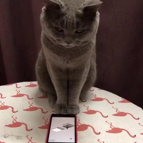 【im-max🐾美拍】别人玩游戏VS我玩游戏#宠物##微...