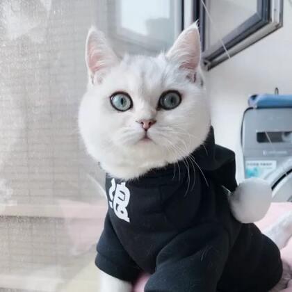 我们家新晋U乐国际娱乐担当~小哇,😂果然没让我失望,对得起我当初一眼就看中了#宠物##猫咪#