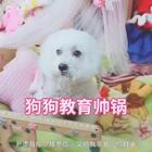#宠物##1秒叫醒你家宠物##狗狗#哈哈,尹家人快来点赞吐槽蒋丫鬟!保护我们沫沫滴零食