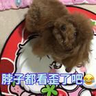 #汪星人##宠物#脖子都看歪了吧,把你馋的😂😂!http://item.taobao.com/item.htm?id=560104715895 莎拉麻麻手工宠物零食!