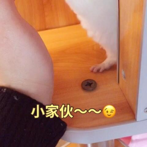 【🍃乌娜麻麻鲜果庄园🍋美拍】糯米宝宝~~😌#宠物#@大大大大...