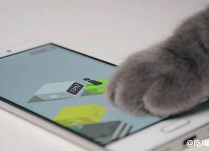 微信跳一跳, 你可能还不如一只猫#搞笑##萌宠#
