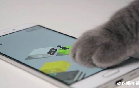 【吃喝实验室美拍】微信跳一跳, 你可能还不如一只猫...