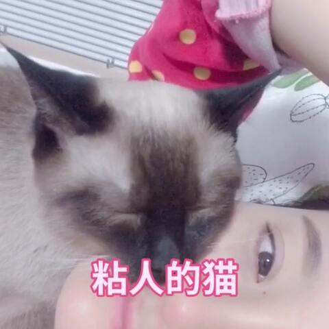 【王小明哦美拍】我家有个粘人的猫~#宠物#