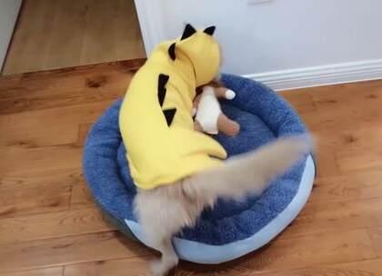 我给我的狗狗买了什么新年礼物!【第三集】狗狗出镜啦~最近一部分来啦,没看前两集的先去看前俩集哈哈~第一次拍这样的生活类视频,炒鸡好玩哈哈,希望你们喜欢我的狗儿子,也希望这支视频能给你们带来好心情哟~#宠物##狗狗##萌宠#