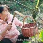 芋头原来还可以这样吃,不炒不煮,估计很多人都没有吃过#我要上热门##美食##农村生活#