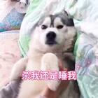 猜猜哪个电影🌝#逗比宿舍欢乐多##宠物#