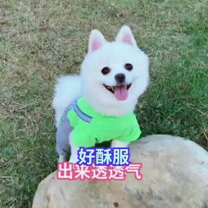 #no promises#最喜欢仔仔阳光般的笑容,看着暖暖滴😜#精选##宠物#