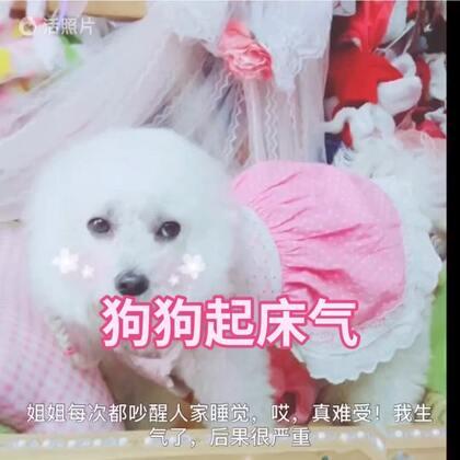 #宠物##1秒叫醒你家宠物##音频跟拍#沫沫跟雨诗姐姐说,以后你们不点赞就不更新视频了😒😒😒伦家生气了,后果可严重了☺☺☺
