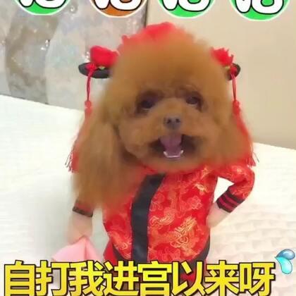 #宠物##搞笑##汪星人#自打我进宫以来呀😂就独得皇上恩宠😂