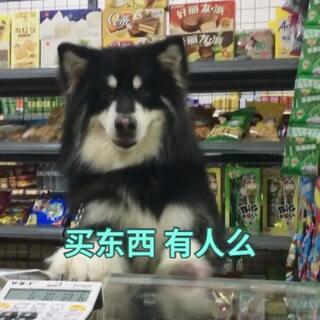 #宠物##阿拉斯加#老板你家的火腿肠都给我上来#出去买东西#