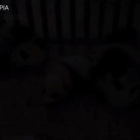 【PANDAPIA美拍】#萌团子日常#是谁?究竟是谁?发...