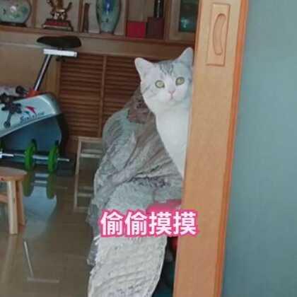 为何要这样偷偷摸摸的看我😂 #宠物##日志##精选#@宠物频道官方账号 @美拍小助手