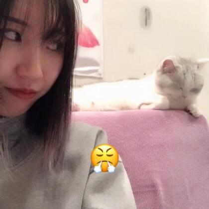 #宠物#大脸猫😤😤😤