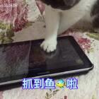 救命!麻麻!!家里进老鼠了啊😱不对 我是只猫😅看我厉害 全部抓起来🙂emmmm 这是体力活 太辛苦 辛(shui)苦(jiao)😂😂😂#宠物##俩喵欢乐多##萌宠暖心15秒#